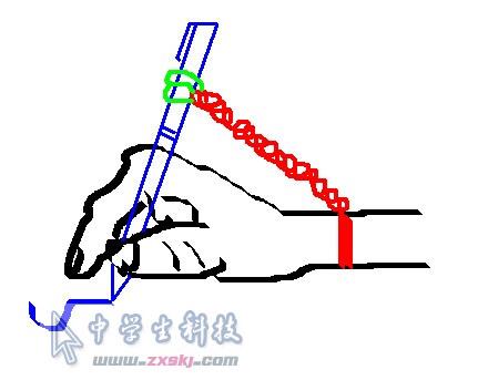 左手腕骨结构图